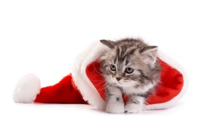Картинка кошка, Рождество, Новый год, christmas, new year, cat, santa hat, Санта шляпу