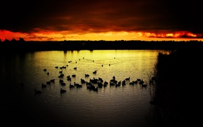 Обои закат, птицы, контраст