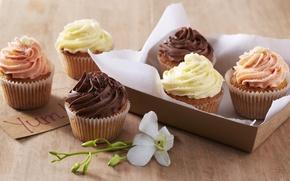 Картинка еда, шоколад, сливки, пирожное, cake, flower, десерт, орхидея, food, сладкое, orchid, chocolate, ваниль, кексы, cream, ...