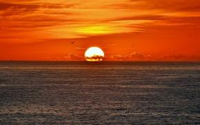Картинка море, небо, солнце, облака, закат, птица