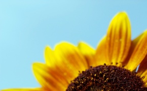Картинка синий, желтый, минимализм, лепестки, 153