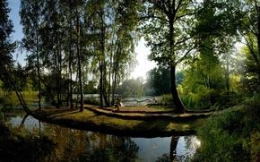 Картинка Деревья, Отражение, Солнце, Зеленый, Вода