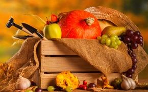 Обои vegetables, овощи, autumn, тыква, натюрморт, урожай, still life, осень, harvest, pumpkin