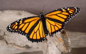 Картинка макро, дерево, бабочка
