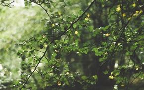 Картинка лес, листья, солнце, деревья, ветви, боке