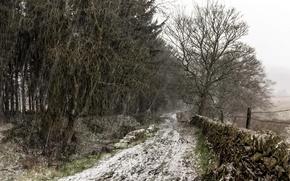 Картинка Tree, Snow, England, United Kingdom, Snowy track, Holme