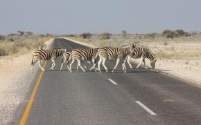 Картинка дорога, пейзаж, зебра, Африка