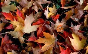Обои осень, листья, желтый, красный, листва, упавший