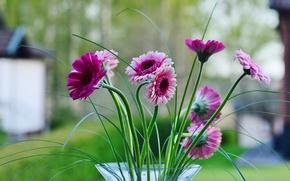 Картинка листья, цветы, лепестки, ваза