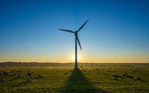 Картинка овцы, ветряк, утро