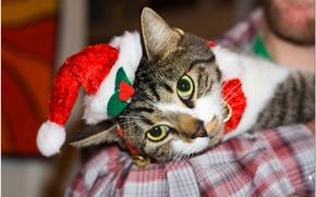 Обои валяется, новогодний, кот