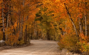 Картинка дорога, деревья, краски, Осень, сентябрь, тополь осинообразный