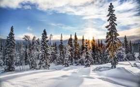 Картинка снег, зима, деревья, Norway, Трюсиль, Trysil, ели, Норвегия, лес