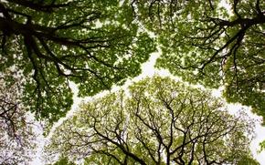 Картинка деревья, Англия, крона, дубы, Камбрия, заказник Рауд Си Вуд