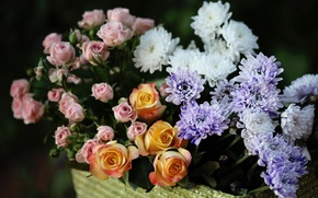Картинка розы, бутоны, хризантемы, © Elena Di Guardo
