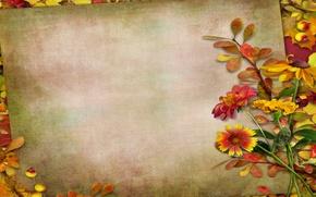 Картинка осень, листья, цветы, ягоды, vintage, background, autumn, leaves