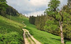 Картинка дорога, трава, пейзаж, природа, Швейцария, Fribourg