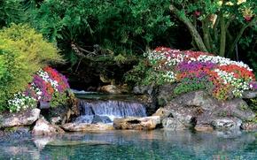 Картинка вода, природа, камни, растения, сад, цветочки, water, flowers, Garden