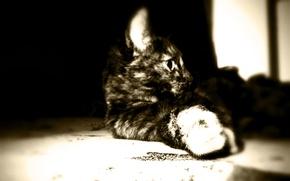 Картинка кошка, макро, сепия