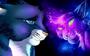 Обои животные, любовь, кошки, слезы, расставание, потеря