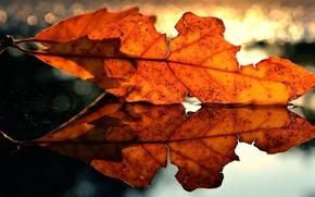 Картинка осень, макро, лист, отражение