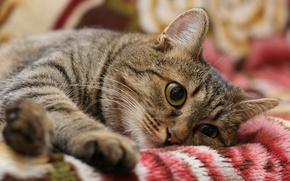 Картинка грусть, кот, настроение
