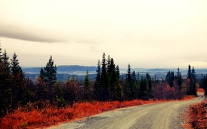 Картинка дорога, осень, лес, Норвегия
