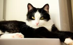 Картинка кошка, кошки, cat, боня