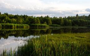 Картинка лес, вода, озеро, река, камыш