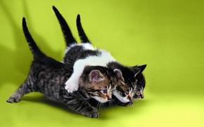 Картинка Кошки, котята, три котенка