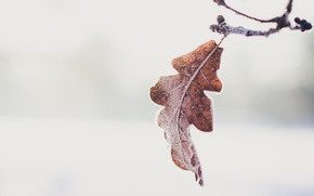 Обои autumn, leaf, branch