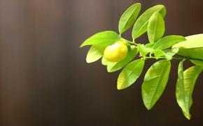 Картинка зелень, тепло, лимон, минимализм, lemon, портретник