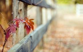 Картинка листья, макро, забор