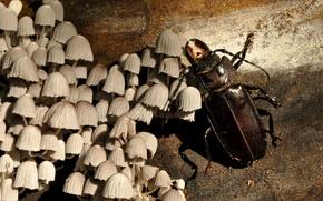 Картинка Wood, Beetle, Champignon