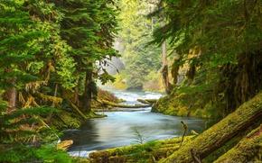 Картинка лес, деревья, природа, река, мох