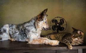 Картинка кошка, кот, ретро, собака, обработка, вентилятор, друзья, пёс, обои от lolita777