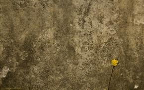 Обои цветок, бетоная, стена