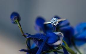 Картинка цветы, камень, лепестки, кольцо, синие, обручальное