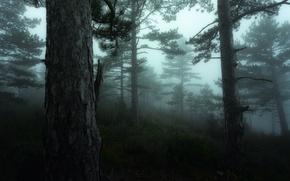 Картинка Fog, Франция, France, Mist, Mood, Luberon, Moss, Green, Bonnieux, David Bouscarle, дымка, зелень, Provence, Nikon, ...