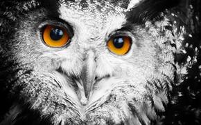 Картинка глаза, сова, перья, филин