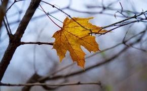 Картинка осень, макро, лист, жёлтый, ветка