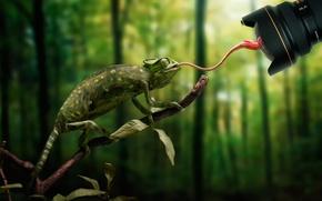 Картинка язык, хамелеон, муха, объектив, промах