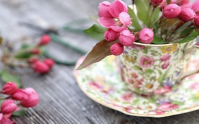 Обои цветы, фон, чашка