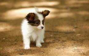 Картинка лето, собака, прогулка