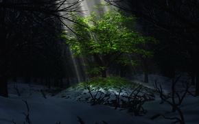 Обои дерево, листва, свет, снег