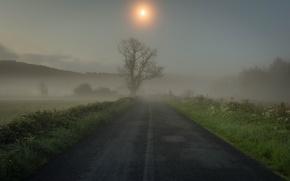 Картинка дорога, трава, туман, дерево, утро