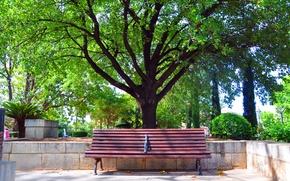 Картинка дерево, отдых, лавочка, лавка