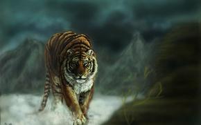 Обои кошка, тигр, взгляд