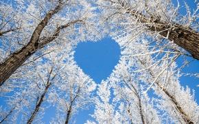 Картинка sky, trees, heart, snow