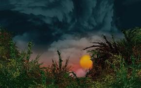 Обои солнце, облака, растения